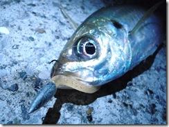 リサイクル釣具パゴスアジング