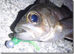 中古リサイクル釣具パゴスアジング