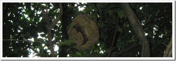 スズメバチの巣/山陰ショアロックフィッシュ