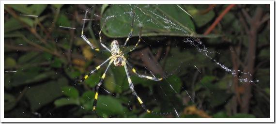 女郎蜘蛛/山陰ショアロックフィッシュ