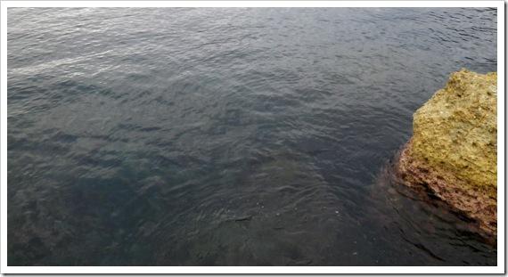 海の様子/山陰ショアロックフィッシュ
