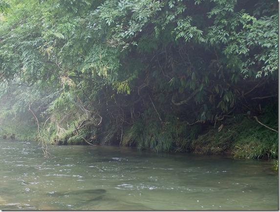 渓流 トラウト 尺山女魚 (4)
