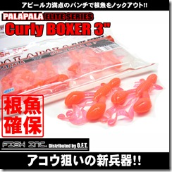 curly_boxer3_1
