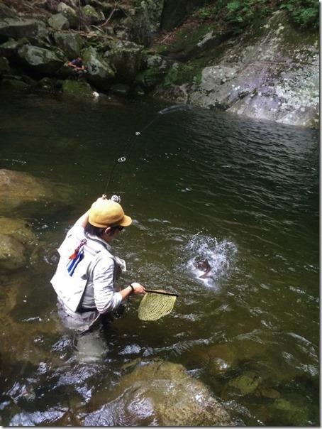 鳥取 渓流 ブラウントラウト