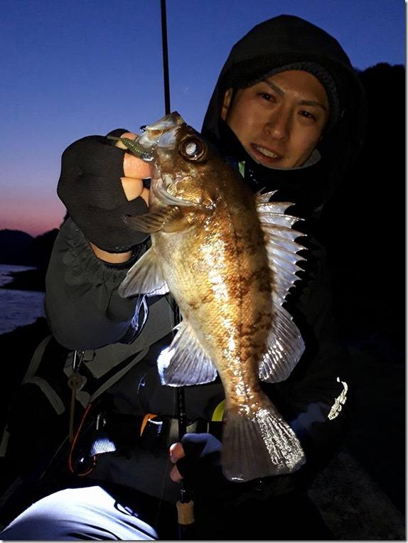 周防大島 メバル メバリング (5)