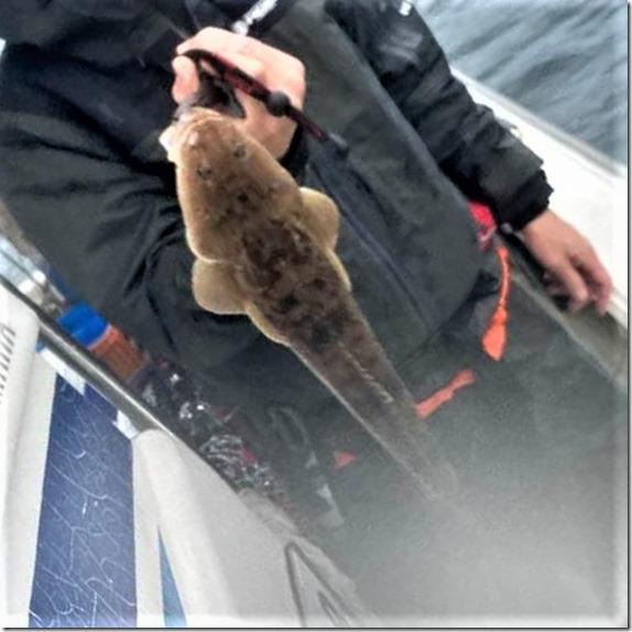 広島湾 岩国沖 ライトジギング サワラ ハマチ (9)